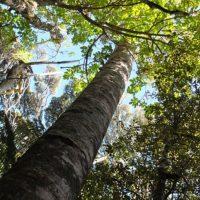Kauri Dieback workshop – 11-12